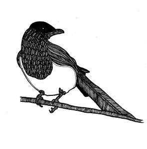 incidental magpie 2