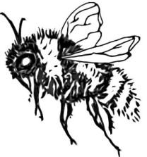 bumblebee1