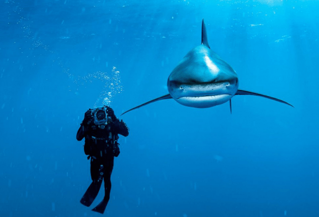 ISN'T THAT THE SHARK FROM 'FINDING NEMO'?