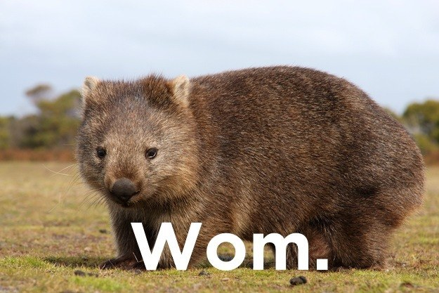What sport do you play with a wombat?