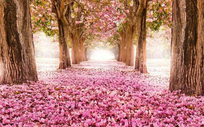 12 - Blossom Path Location Unknown