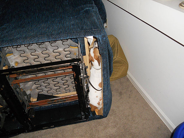 funny-cats-dogs-stuck-furniture-7