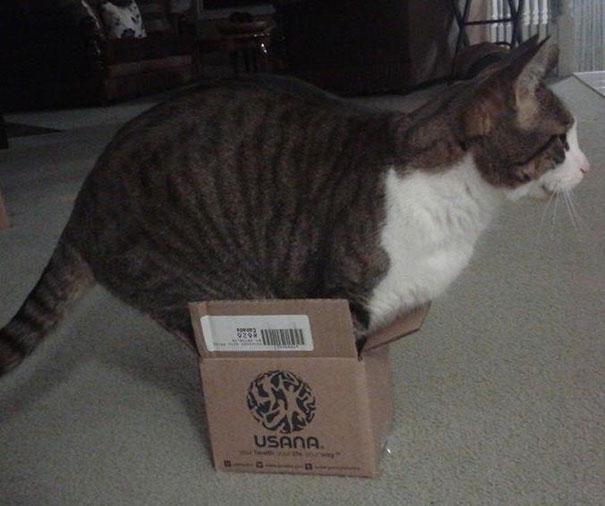 funny-cats-if-it-fits-i-sits-12