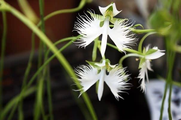 flowers-look-like-animals-people-monkeys-orchids-pareidolia-32