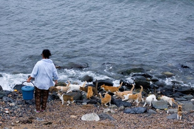 The local fishermen are known to feed the cats on Cat Heaven Island.