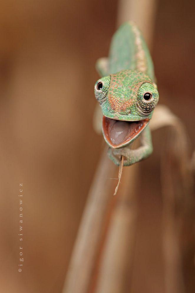 cute-reptiles-161__700.jpg?w=662