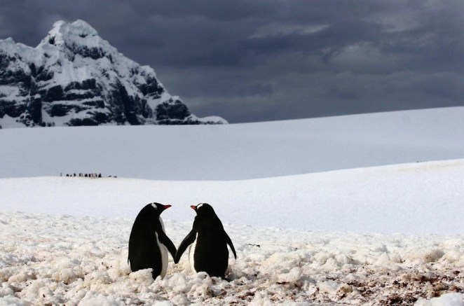 Penguins Walk Hand In Hand