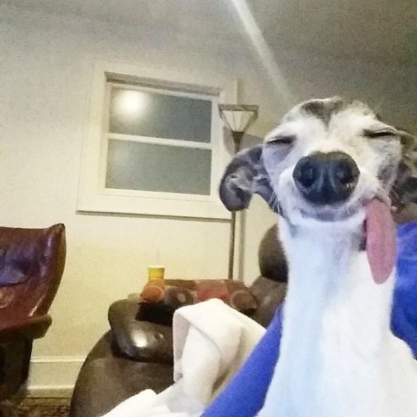 Out Sloth Sid Tongue 7