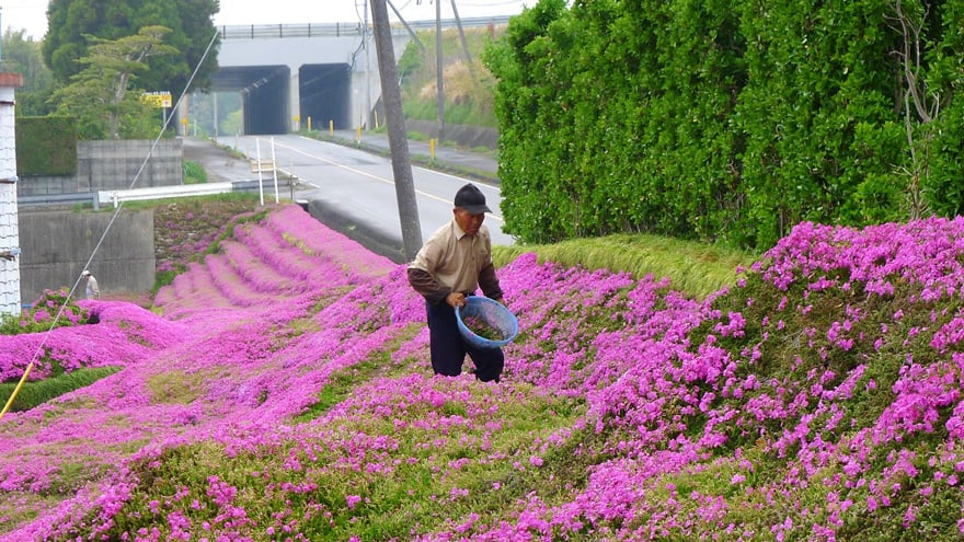 So The Devoted Husband Spent Two Years Planting The Pink Blossoms On Every  Inch Of His Land To Create A Fragrant Flower Garden That His Wife Could  Enjoy.