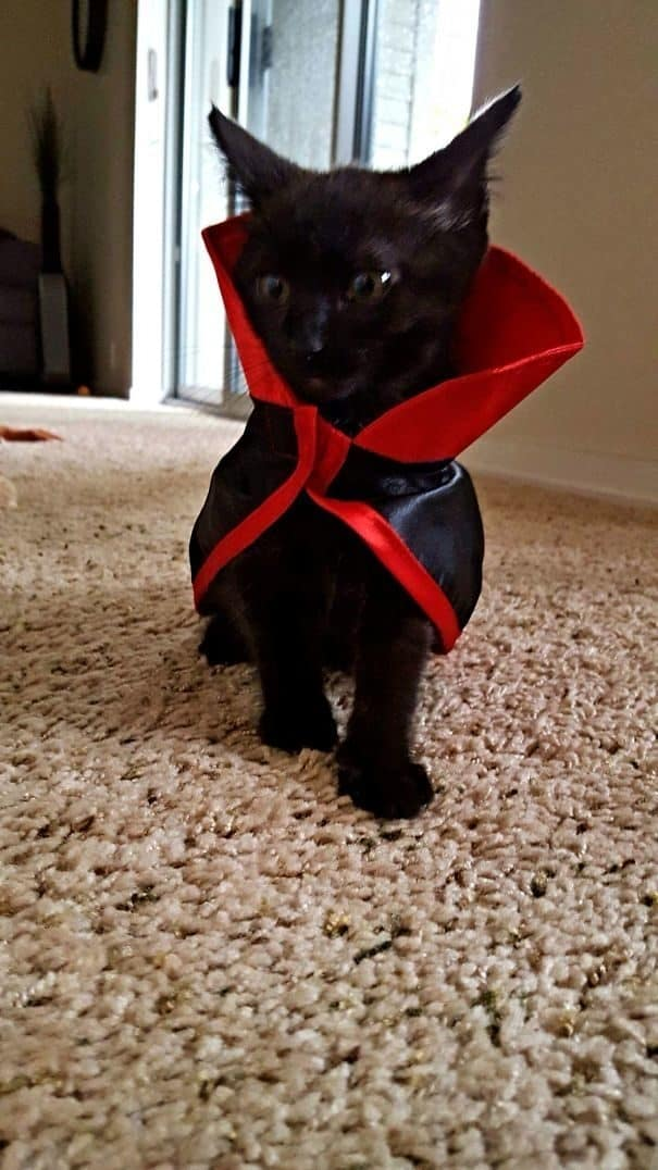 21 Totally Pawsome Costumes For Your Cat This Halloween