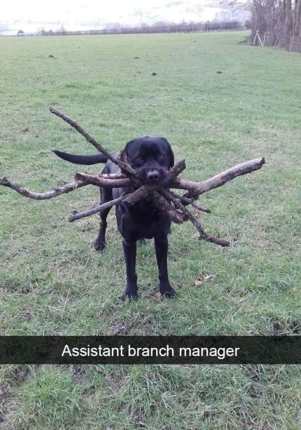 animal snapchats 32 587f6736a7bbc  700 - Just 23 Hilarious Animal Snapchats So You Can Start Your Week With A Smile