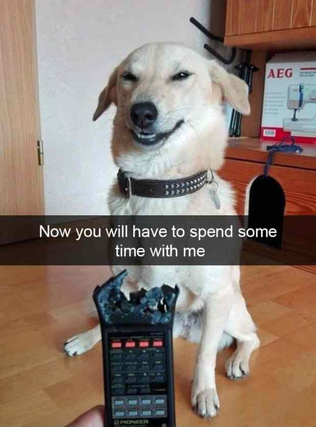 animal snapchats 67 5881d4d32b1f1  700 - Just 23 Hilarious Animal Snapchats So You Can Start Your Week With A Smile
