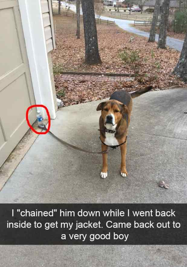 animal snapchats 8 587f66f199514  700 - Just 23 Hilarious Animal Snapchats So You Can Start Your Week With A Smile