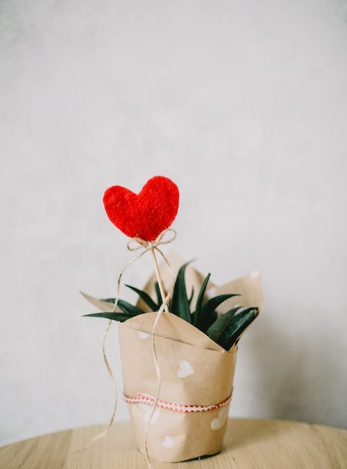 Heart stake in an aloe vera plant