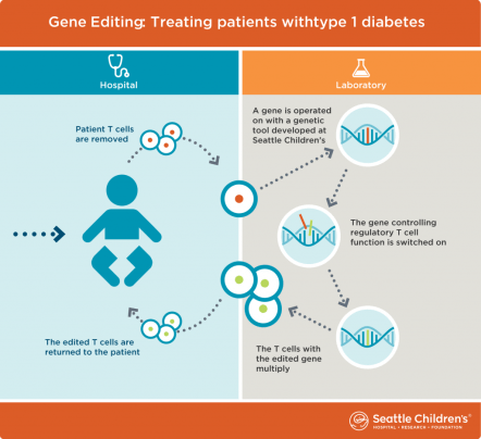 This graphic shows the process of gene editing.