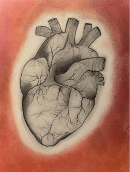 A sketch of a human heart