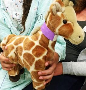 Stuffed Animal - Surgery