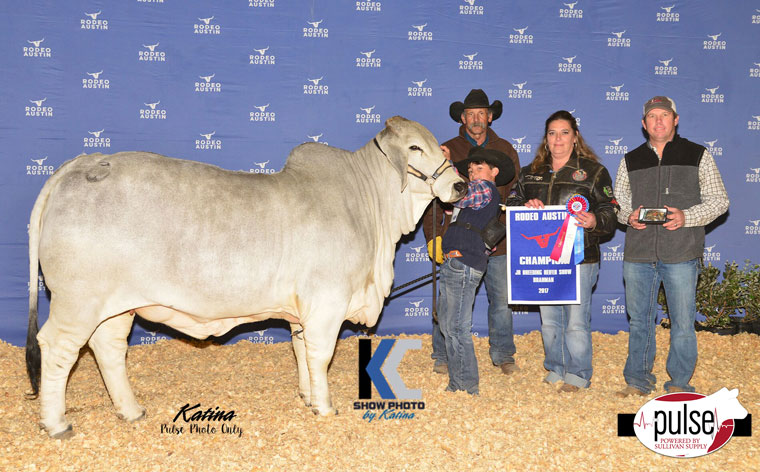 Rodeo Austin Jr Brahman Show Champions The Pulse