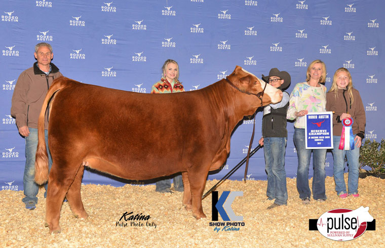 Rodeo Austin Jr Simmental Heifers Champions The Pulse