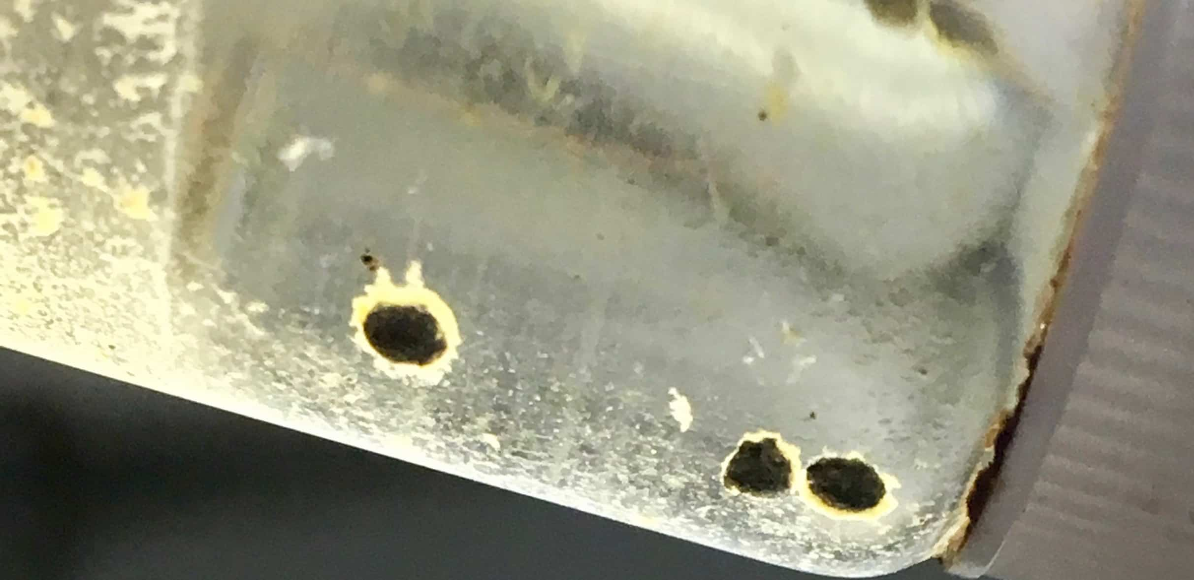 Investigación de colegiales podría servir para proteger corales
