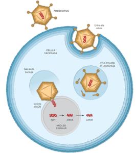 Cuatro tipos de vacunas contra el COVID-19: ¿qué son y cómo funcionan?