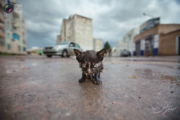 Жизненные фотографии от Slim Letaief… (23 фото) | | PulsON ...