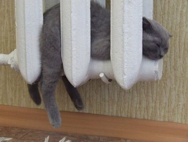 Кошки на батарее (16)