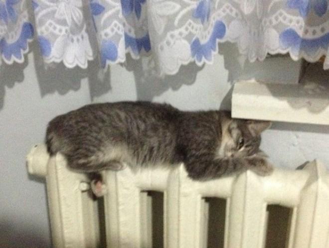 Кошки на батарее (15)