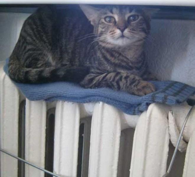 Кошки на батарее (6)