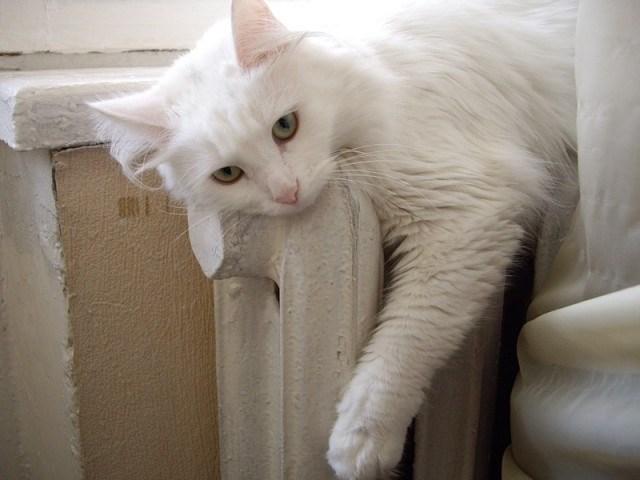 Кошки на батарее (1)