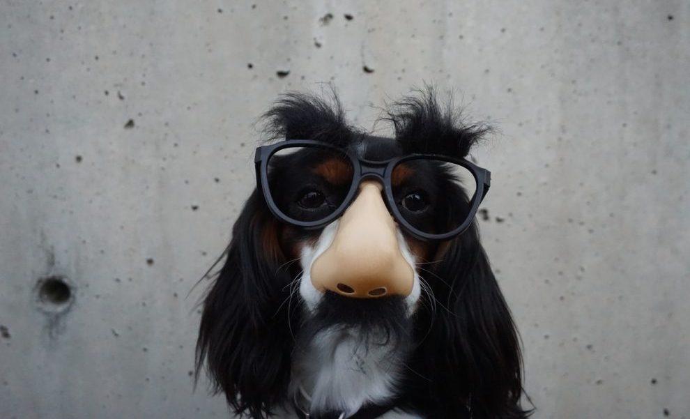 Ecommerce - dog - animal