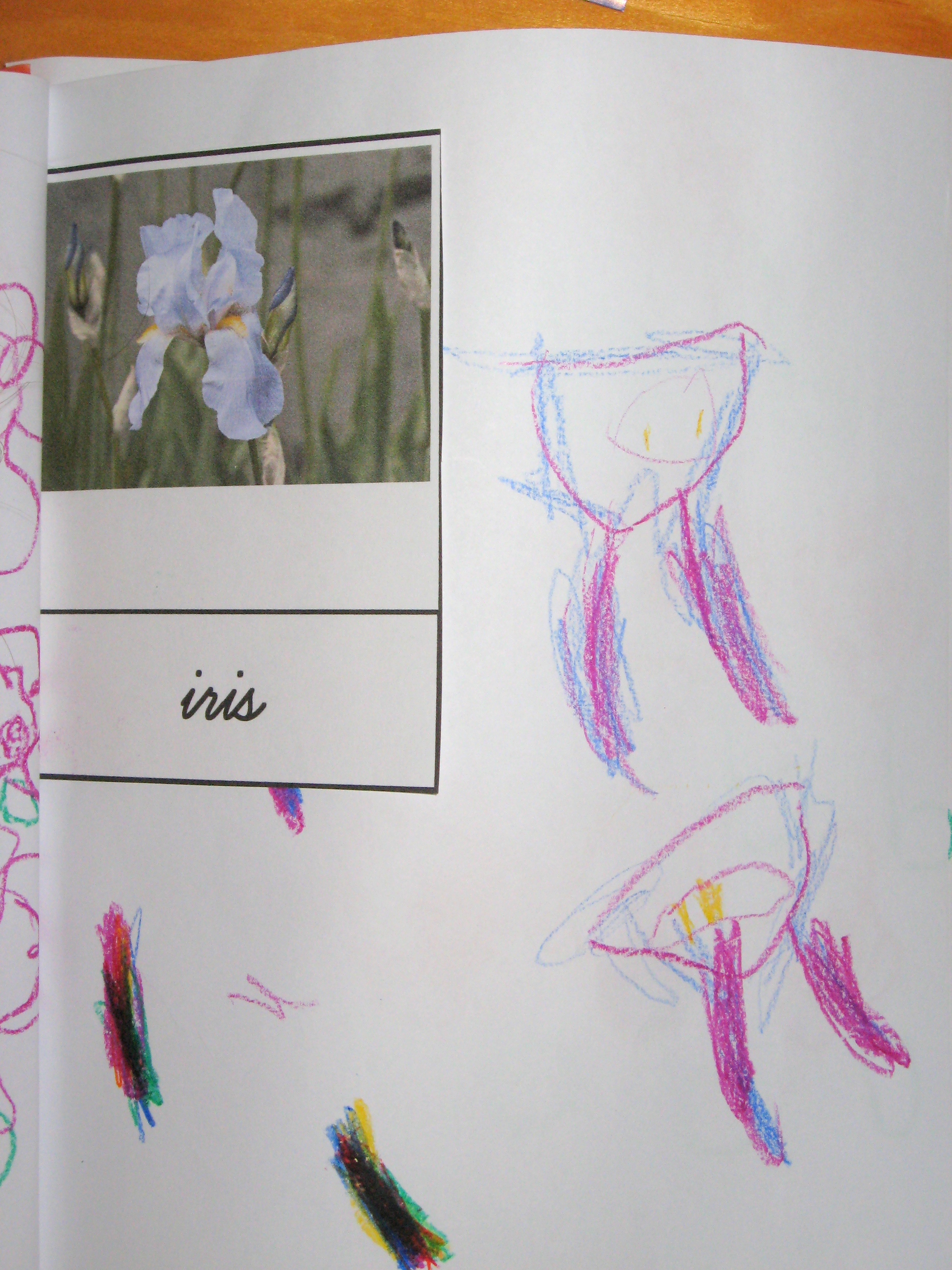 Spring Flowers Printable And Activities