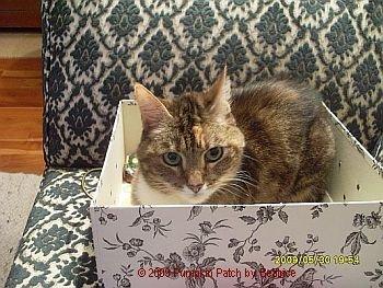 Sally in der Kiste