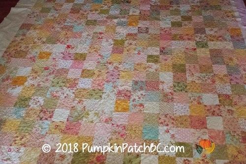 Pumpkin Patch Bc
