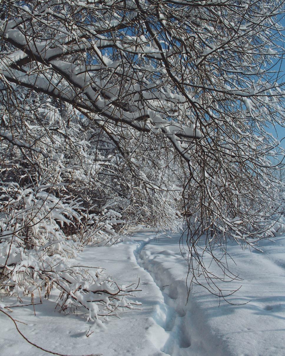 Венец зимы
