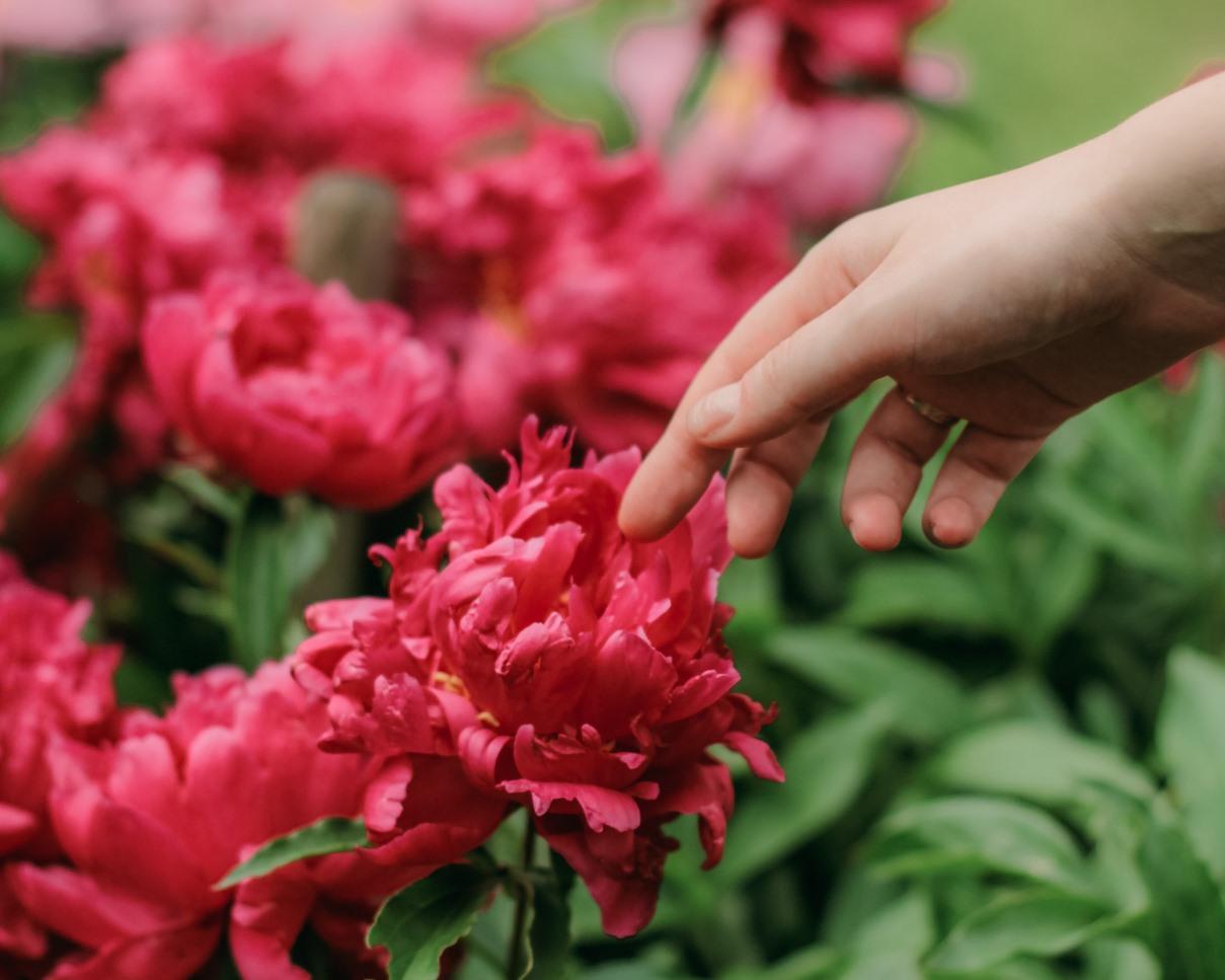 У меня должны быть цветы всегда