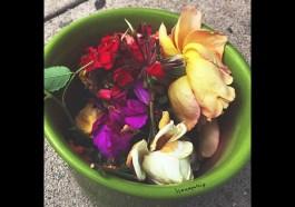 Honeywhip – Flowers