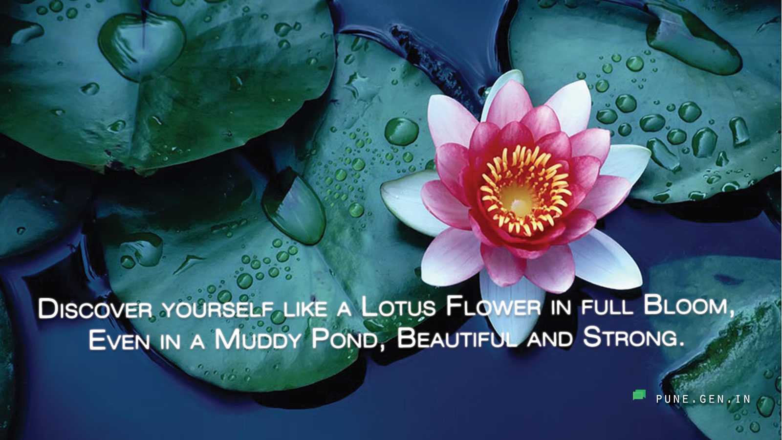 Beautiful quotes discover yourself like a lotus wishes beautiful quotes discover yourself like a lotus wishes messages punen izmirmasajfo