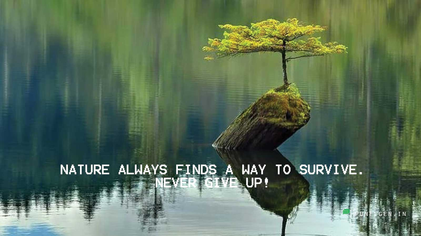 Positive Thinking : Nature Always Finds A Way …