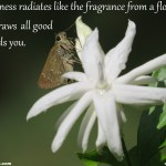 Plants And Flowers Of India Jasminum Sambac Mogara Punemate