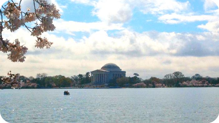 Paddle boaters get a clear view of the blossom ensconced Jefferson Monument in D.C.
