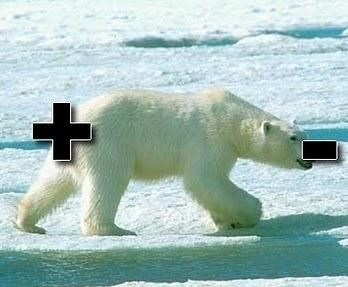 polar bear pun