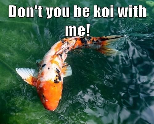 Don't be koi with me, coy with me, koi fish pun