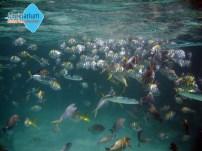 Tropiske fisk