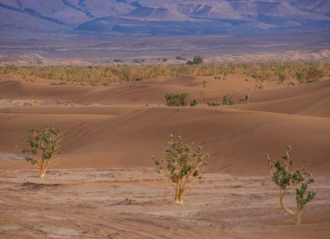 foto del deserto, sabbia e alcune piante