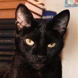 foto della mia gatta nera Peggy