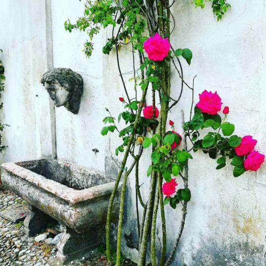 rose dai colori cangianti nella villa