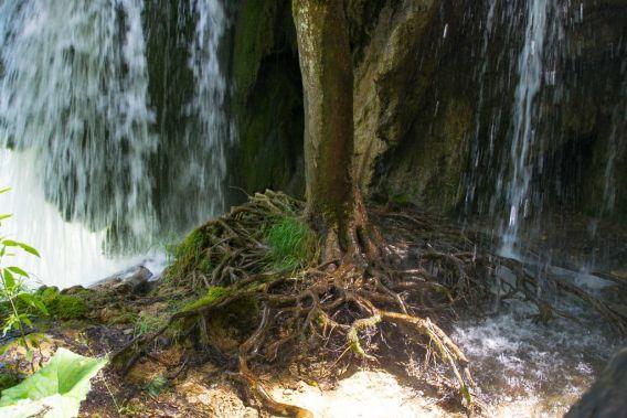 pianta fra cascate
