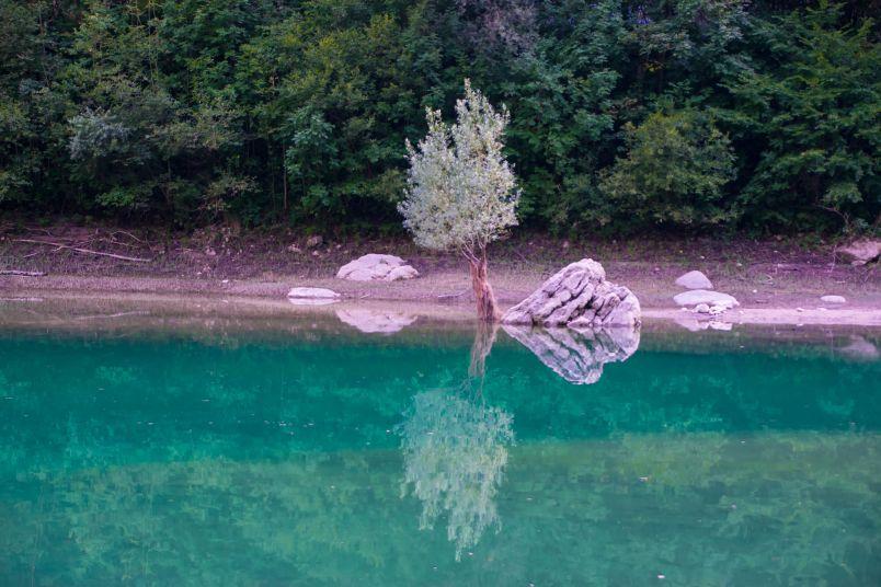 riflesso sul lago di un albero alfabeto del viaggiatore