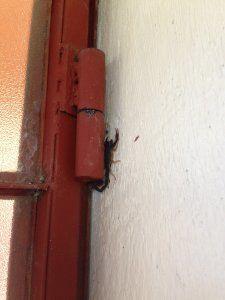foto dello scorpione